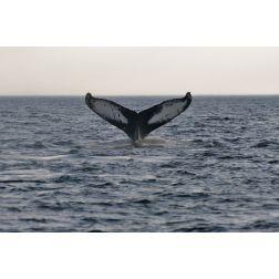 Des croisières aux baleines en partance de la région