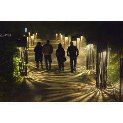 Foresta Lumina bonifie son parcours