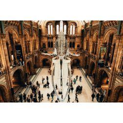 T.O.M.: Pour survivre à la crise, les lieux culturels britanniques se mettent au numérique