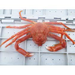 À TABLE: Fourchette Bleue présente les espèces marines valorisées et des recettes