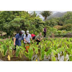 Chaire de tourisme Transat: Analyse - Hawaï : voyager et redonner à la communauté