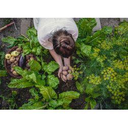 ITHQ: 5 pistes de solution pour rendre notre gastronomie plus responsable