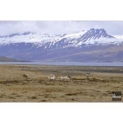 Le tourisme en Islande plus cher avec la fin de la taxe de vente réduite