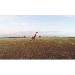 Vu des airs : les plus beaux vidéos de drones