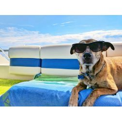 Chaire de tourisme Transat: Analyse - Comment recevoir les voyageurs avec compagnons canins