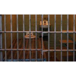 Tourisme carcéral