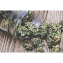 L'ITHQ et l'AHQ s'associent pour offrir des ateliers sur le harcèlement et le cannabis en milieu de travail