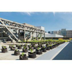 Le Laboratoire d'agriculture urbaine du Palais des Congrès de Montréal accueille un vignoble