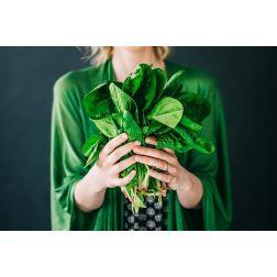 Un nouveau programme suivant la tendance végétalienne à l'ITHQ