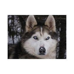 Nouveauté : traineau à chiens au Parc Jean-Drapeau