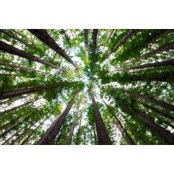 T.O.M.: Ecosia, le moteur de recherche qui plante des arbres à chaque réservation d'hôtel