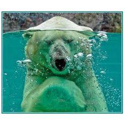 Le Zoo sauvage de St-Félicien se distingue