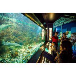 Exploramer: Achalandage record, mais risque imminent de mortalité des animaux marins de l'aquarium