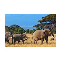 Le tourisme kényan en crise
