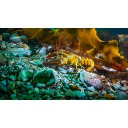 Portrait d'un photographe et caméraman sous-marin: Manuel AÑÒ qui nous fait découvrir le merveilleux monde aquatique de la Gaspésie...